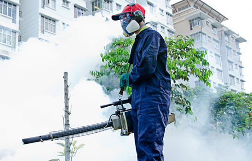Find Out How Pest Control Services Can Win the Day against Pests